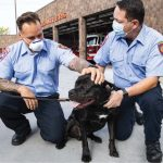 Dog nearly killed in June fire reunited with Schenectady firefighters who saved him